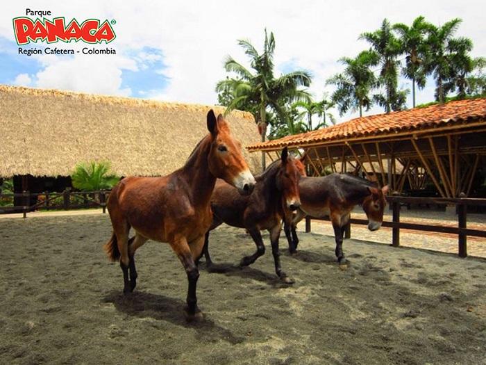 Panaca Región Cafetera, nuevo aliado del programa Servimos